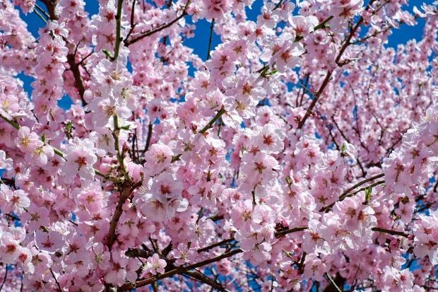 Pe 21 aprilie credincioșii sărbătoresc Duminica Floriilor